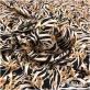 """Вискоза штапель плательная атласная принт Ratti цветочки на фоне """"зебры"""""""