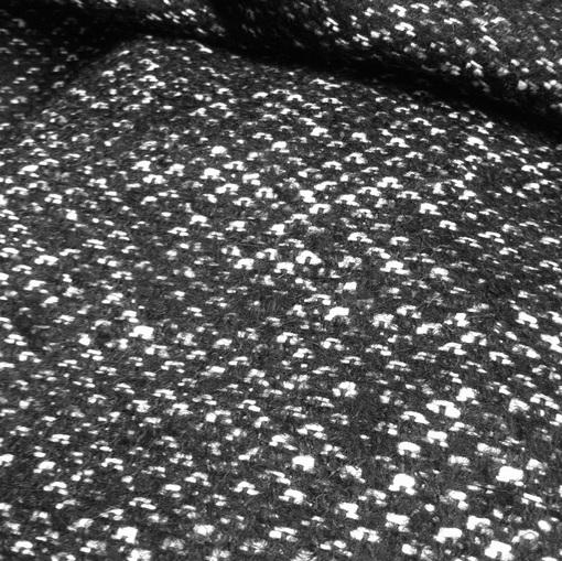Пальтово-костюмный твид черно-белый