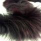Мех натуральный для воротника чёрно-баклажанного цвета 6х75 см