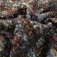 Шанель нарядная с синими и винными вкраплениями на черном фоне с люрексом