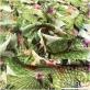 Шелк стрейч принт LACROIX тропическая растительность
